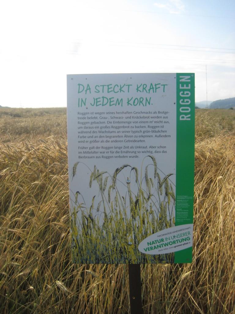 Ein Schild im Kornfeld, das ist immer fein, denn es ist Sommer ...